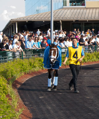 A race horse walks past the crowd.